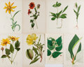 Books:Prints & Leaves, [Prints and Engravings]. Lot of Eight Color Prints of Flowers.[Various]: [n.d., ca. 1900]. Approximately 10 x 7 inches, alt...