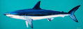 Post-War & Contemporary:Contemporary, KEN LUCE (American, 20th Century). Short Fin Mako (after FrankStick). Acrylic on canvas. 25-1/4 x 72 inches (64.1 x 182...