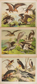 Books:Prints & Leaves, [Birds of Prey]. Group of Three Color 19th Century Prints. Approx.12.75 x 16.25 inches. Vertical crease in each. Very good....