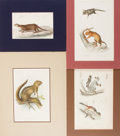 Books:Prints & Leaves, [Animals]. Group of Four 19th Century Prints with Hand-Coloring.Various sizes. Matted. Very good....