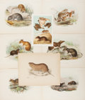 Books:Prints & Leaves, [Animals]. Group of Eight 19th Century Color Prints. Various sizes.Very good....
