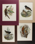 Books:Prints & Leaves, [Birds]. Group of Four 19th Century Hand-Colored Prints. Varioussizes. Matted. Very good....