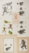 Books:Prints & Leaves, [Frogs]. Group of Seven 19th Century Prints, Some Color. Varioussizes. Very good....