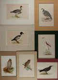 Books:Prints & Leaves, [Birds]. Group of Nineteen Related 19th Century Prints, Some withHand-Coloring. Various sizes. Matted. Very good....