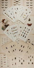 Books:Prints & Leaves, [Insects]. Group of Approximately Thirty-nine 19th Century ColorPlates. Various sizes. Very good....