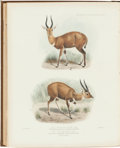 Books:Natural History Books & Prints, Philip Lutley Sclater. The Book of Antelopes. London: R. H. Porter, 1899-1900. First edition. Volume IV only. Wi...