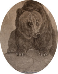 Paul Bransom. Portrait of a Bear. Charcoal on board. Measures 17.5 x 14 inches. Signed lower right